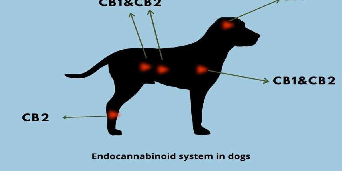 Is Nature's Paw Pet CBD Oil safe To Use? Customer Review's Latest 2021