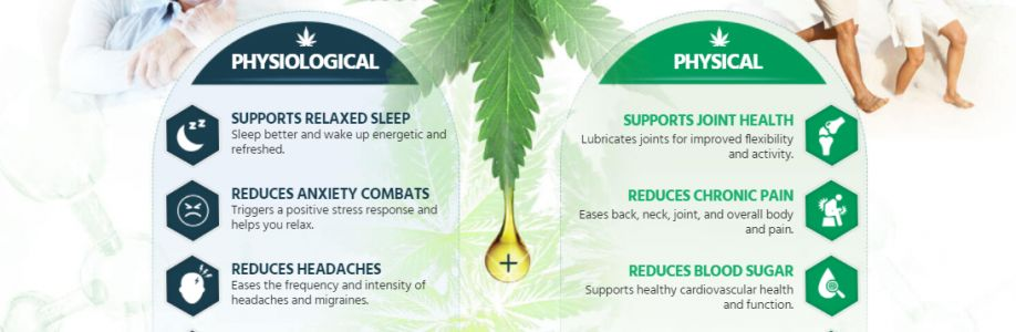 The 5 Secrets That You Shouldn't Know About Alpha Extracts Pure Hemp Oil Canada.